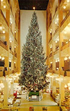 Sterling Lindner Davis Christmas tree 1 the xmas trees were between 50 and 60 ft tall....