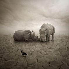 Lost in desert by Leszek Bujnowski, via 500px