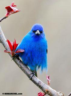 Azul demais!!