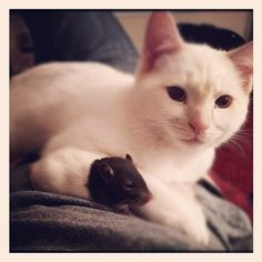 Best friends #cat #rat
