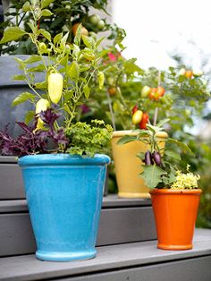 container gardens love the contrasting colors and different sizes