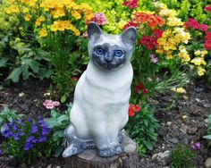 Winstanley cat