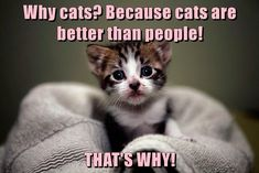 Why cats? Because cats are better than people! THAT'S WHY! #catfacts