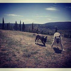 Desde #Soria hoy tenemos el placer de compartir  de @mrpongostaff . . #mascota #perro #instadog #inspiredbypets #dog #doglover #dogofinstagram #dogoftheday #ilovemydog #doglife #animal #animalsofinstagram #pets #petstagram #petsofinstagram #picoftheday #cute #follow #followme #follow4follow #instafollow #tbt Mountains, Animal, Nature, Travel, Pets, Dogs, Naturaleza, Trips, Animals