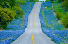 Bluebonnets lining road, Texas (© Donovan Reese/Getty Images)~~~road trip~~~