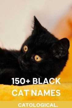 Are you ready? Below you'll find the top 150  cat names for black cats that are cute, funny, pop-culture inspired, traditional, unique… and even some that include cat puns. #blackcats #catnames #cutecats #catblog Names For Male Cats, Names For Black Cats, Badass Cat Names, Jacob Black Twilight, Black Cat Appreciation Day, Cat Puns, Japanese Cat, Cat With Blue Eyes, Black Widow Marvel