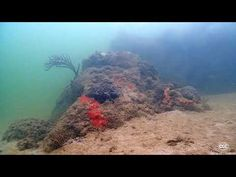 Coral Morphologic » Coral City Camera Live Feed, Virtual Field Trips, Virtual Tour, Climate Change, Underwater, Traveling By Yourself, Aquarium, Environment, Coral