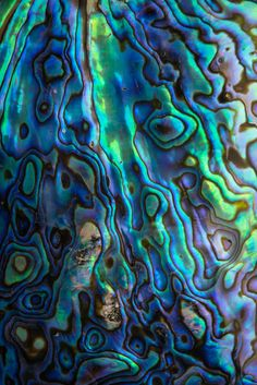Abalone by Davidhttp://www.pinterest.com/pin/258534834833214882/ Bogard-sea iridescence
