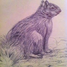 Quick ballpoint pen sketch of a Squirrel.