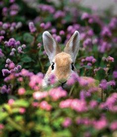 Easter rabbit in flowers. hard to tell if the bunny is real or not! Beautiful Creatures, Animals Beautiful, Baby Animals, Cute Animals, Nature Animals, Especie Animal, Tier Fotos, Fauna, Cute Bunny