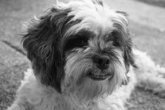 Dog Stuff, Dogs, Animals, Animaux, Doggies, Animal, Animales, Pet Dogs, Dog