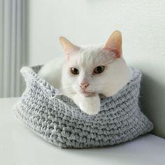 Chapichapochatpapo encore un nouveau chat blanc ! White Cats
