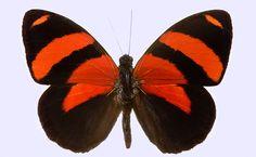 BD Butterfly 5769 jpg