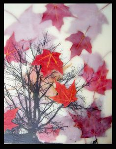 all pulped out: encaustic class, red leaves