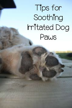 Itchy sore or red dog paws can be a symptom of allergies. Dog paws that are itchy red or sore are usually related to allergies and excessive licking. Learn how to help soothe them. #Dogs #SorePaws