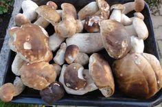 Jak uchovat houby na zimu | recept na nakládané houby Marmalade, Preserves, Grilling, Stuffed Mushrooms, Canning, Vegetables, Eat, Food, Cottage