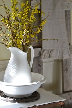 Forsythia Blooms in white pitcher