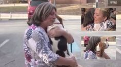 Dog Return to his Owner After 17 Months from Of absence