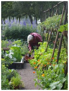 Over the past little while potager gardens have grown to be quite popular in the garden design world. A lot of people wonder how to develop one Potager Garden Potager Garden, Veg Garden, Vegetable Garden Design, Edible Garden, Garden Kids, Garden Landscaping, Cottage Garden Design, Cottage Garden Plants, Farm Gardens
