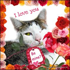 Have a purr-fect Valentine's Day! Great photo for cat lovers.