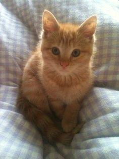Cute orange kitty . . .