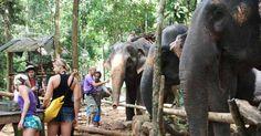Трекинг на слонах. Одной из самых популярных экскурсий на острове Ко Чанг является треккинг на слонах по джунглям острова