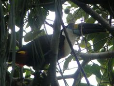 Guacamayo Ecolodge Cuyabeno Amazon Jungle Ecuador - Exploramum & Explorason