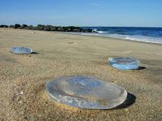 Image result for jellyfish on beach