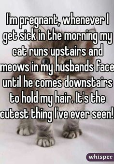 Im pregnant, whenever I get sick in the morning my cat runs upstairs and meows in my husbands face until he comes downstairs to hold my hair. Its the cutest thing Ive ever seen! Sweet Stories, Cute Stories, Morning Cat, Whisper Quotes, Funny Animals, Cute Animals, Animal Funnies, Cat Run, Whisper Confessions