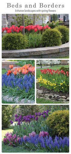 43 best around the house spring flower bulb inspiration images on are you ready to enjoy an amazing bulb garden next spring mightylinksfo