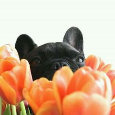 I would try this, but Angus would eat the flowers. Lol