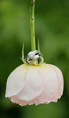 Love this Idea ♡ #wedding #rings