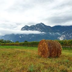 A single bail of hay on a vineyard in There's beauty everywhere! Bail Of Hay, Vineyard, Italy, Mountains, Nature, Instagram Posts, Travel, Beauty, Italia