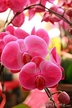 Orchids i dont care how much they are orchids will be in my wedding!!