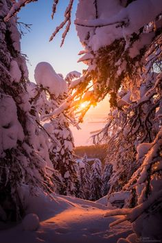This snowy view is from near the summit of Ukko-Koli at the Koli National Park, in Lieksa Finland. Beyond the trees lake Pielinen rests under its cover of ice.