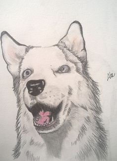 Lobo :Abe