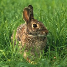 how to keep rabbits out of garden rabbit control stop rabbits1