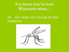 You know you're from Wisconsin when. this is true but then they would be protected, and we don't want that! Wisconsin Facts, Wisconsin Funny, Bible Quotes, Bible Verses, Hilarious, Funny Stuff, Get To Know Me, Green Bay