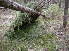 hameleon: как строить шалаш в лесу