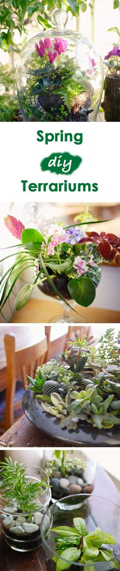 Jump-start spring with a DIY terrarium. Learn how to make a beautiful indoor terrarium with our 4 easy terrarium ideas and plant suggestions. How To Make Terrariums, Terrarium Diy, Garden Fence Panels, Homemade Bird Feeders, Garden Boxes, Garden Ideas, Pallets Garden, Glass Garden, Amazing Gardens