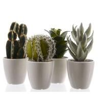 Assorted Artificial Cactus Potted Plant 9cm x 17cm - Homewares