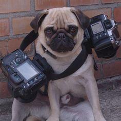 Photographer !!!