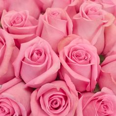 Add a splash a color to any arrangement with our Marry Me Pink Rose! This rose displays pink petals that slowly open up to a beautiful bloom. Marry Me Pink Pink Diamond Wallpaper, Pearl Wallpaper, Flower Wallpaper, Cute Pink, Pretty In Pink, Pretty Roses, Pink Power, Blush Pink Weddings, Pink Bouquet