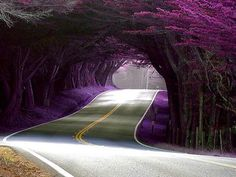 I would ♥ to drive thru this. :)