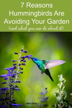 7 Reasons Hummingbirds Are Avoiding Your Yard and what you can do about it. Hummingbird House, Hummingbird Flowers, Hummingbird Swing, Hummingbird Nectar, Hummingbird Food, How To Attract Hummingbirds, How To Attract Birds, Attracting Hummingbirds, Humming Bird Feeders