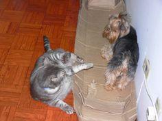 Pets Patinhas: Brincando Adoro brincar com meu irmãozinho, ele su...
