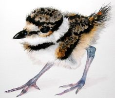 """Baby Killdeer""  Watercolor  Kimberly Meuse Watercolor Paintings Of Animals, Watercolor Bird, Alcohol Ink Art, Sea Shells, Christmas Cards, Birds, Watercolors, Butterflies, Nature"