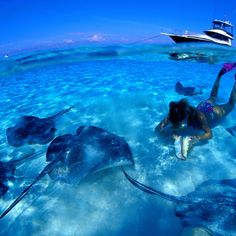 Snorkeling in Fort Lauderdale | Snorkel Tour -Yolo Boat Rentals