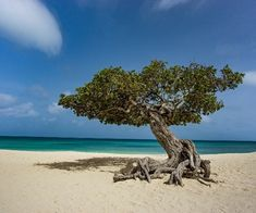 Mind-boggling travel rules and the ever-pressing environmental dilemma over holidays makes a winter sun break look like a minefield. But help is at hand with the Caribbean's leading environmentally-friendly destination, Aruba, which can promise winter-green-luxury and guilt-free stays to set the eco-conscience at rest. This Dutch Caribbean haven is well-recognised as a green pioneer in […] The post Guilt-free green luxury in Aruba appeared first on A Luxury Travel Blog.