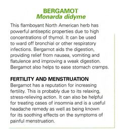 Bergamot - infographic only - No link to anything else. Natural Health Remedies, Natural Cures, Natural Healing, Herbal Remedies, Healing Herbs, Holistic Healing, Medicinal Plants, Alternative Health, Alternative Medicine